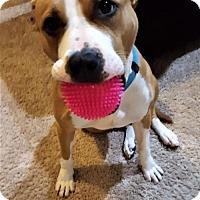 Adopt A Pet :: Ginger - St. Bonifacius, MN