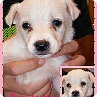 Adopt A Pet :: Brûlée - Allen, TX
