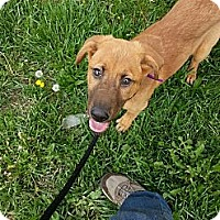 Adopt A Pet :: Ruby - Indianapolis, IN