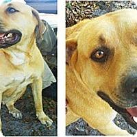Adopt A Pet :: Diane - Miami, FL