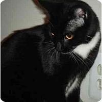 Adopt A Pet :: Farrah - Kensington, MD