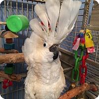 Adopt A Pet :: Mariah - St. Louis, MO