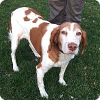 Adopt A Pet :: OH/Faith - Erie, PA