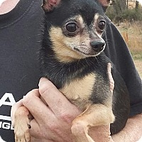 Adopt A Pet :: Kodi - Carthage, NC