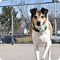Adopt A Pet :: Collins - Meridian, ID
