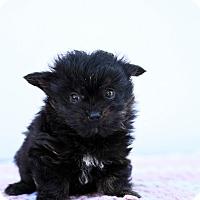 Adopt A Pet :: Mr. Right - Auburn, CA