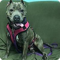 Adopt A Pet :: Gemma - Manchester, CT