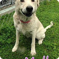 Adopt A Pet :: Molly - Georgetown, SC