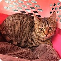 Adopt A Pet :: Julie - East Brunswick, NJ