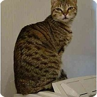 Adopt A Pet :: Pixie - Arlington, VA