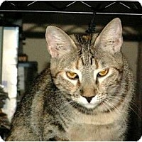 Adopt A Pet :: Unusual Fey - Scottsdale, AZ