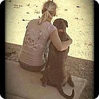 Adopt A Pet :: Dixie - Alamogordo, NM
