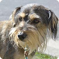 Adopt A Pet :: Bo - Meridian, ID