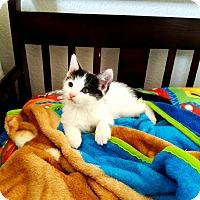 Adopt A Pet :: Presley - Palmdale, CA