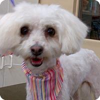 Adopt A Pet :: Mattie - Covina, CA