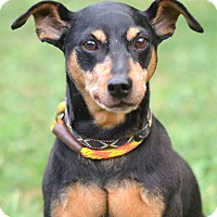 Adopt A Pet :: DEXTER - Linden, NJ