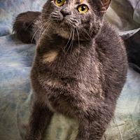 Adopt A Pet :: DELILAH - Anna, IL