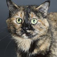 Adopt A Pet :: Miss Dickerson - Nashville, TN