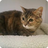 Adopt A Pet :: Seven - Goshen, NY