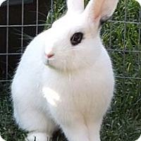 Adopt A Pet :: Prissy - Santee, CA