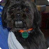 Adopt A Pet :: Samson - Seattle, WA
