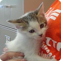 Adopt A Pet :: Idgie - Crawfordville, FL