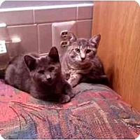 Adopt A Pet :: Gigi & Zeke - Portland, ME