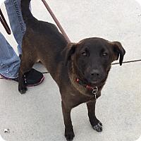Adopt A Pet :: Nala - Battle Creek, MI