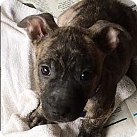 Adopt A Pet :: Jensen - Houston, TX