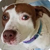 Adopt A Pet :: Jinxy - Philadelphia, PA