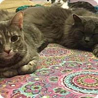 Adopt A Pet :: Shiloh - Burlington, KY