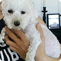 Adopt A Pet :: Addie - Las Vegas, NV