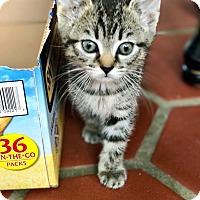 Adopt A Pet :: Daphne - Naperville, IL