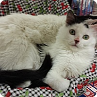 Adopt A Pet :: Cadbury & Ken - Chesapeake, VA