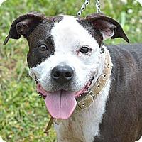 Adopt A Pet :: Elsie - Mt. Vernon, IN