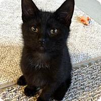 Adopt A Pet :: Bugera - Barnegat, NJ