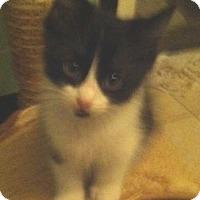 Adopt A Pet :: Freebird - Cocoa, FL
