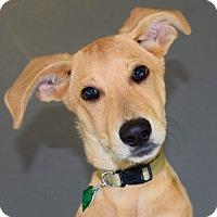 Adopt A Pet :: *Willow - PENDING - Westport, CT