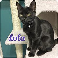 Adopt A Pet :: Lola - Arlington/Ft Worth, TX