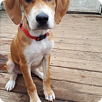Adopt A Pet :: Yahtzee - Cleveland, OH