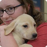 Adopt A Pet :: Chief Tui - Ogden, UT
