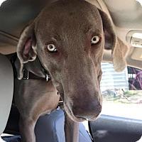 Adopt A Pet :: Elvis - Birmingham, AL