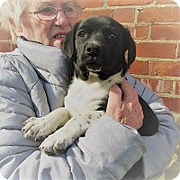 Adopt A Pet :: Lanny - Germantown, MD
