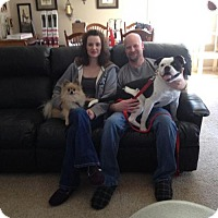 Adopt A Pet :: Mickey G - ADOPTED - Northville, MI