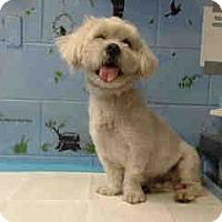 Adopt A Pet :: URGENT on 4/4 SAN BERNARDINO - San Bernardino, CA