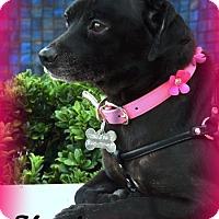 Adopt A Pet :: Kayla - Anaheim Hills, CA