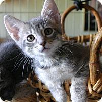 Adopt A Pet :: Erin - Sherman Oaks, CA