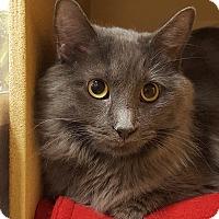 Adopt A Pet :: Elaina - Grayslake, IL