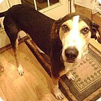 Adopt A Pet :: Joey - Schererville, IN