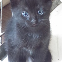 Adopt A Pet :: Minga - Willington, CT